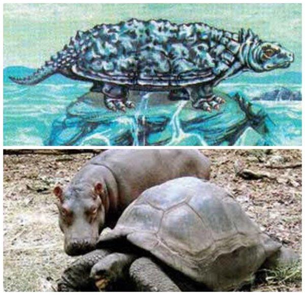 20-метровая черепаха с островом на спине всплыла в Тихом океане