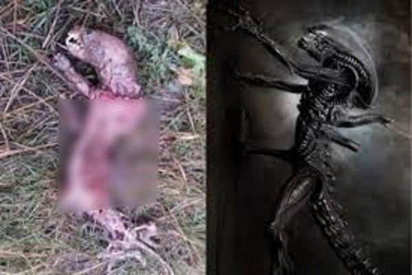 Караулил альпинистов на пике Тянь-Шаня: В Кыргызстане нашли грудолома с Нибиру
