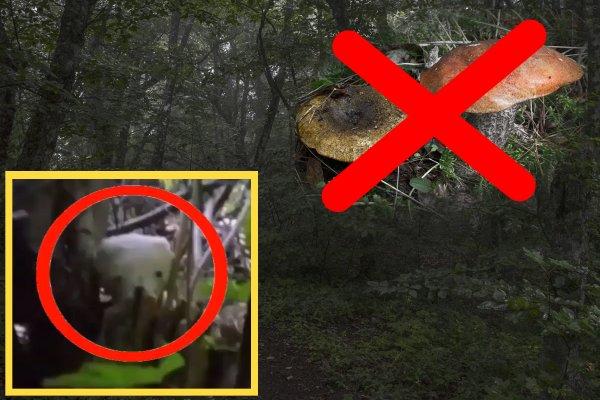 Грибов нет, одни чудовища: Грибник нашёл гоблина в крымском лесу