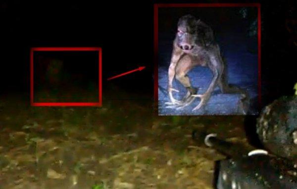 Чупакабра по-кавказски: Дагестанский охотник держал под прицелом карлика-мутанта