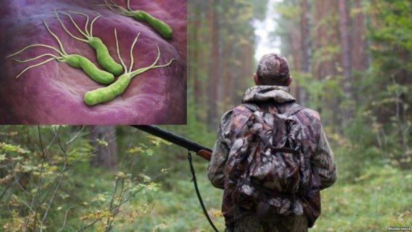 «Шкура с букетом»: браконьеры подцепили смертельную болезнь после разделки туш под Припятью