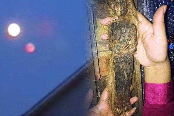 Фея с Нибиру найдена в Тюмени – Ветеран 90 лет хранил в погребе труп пришельца