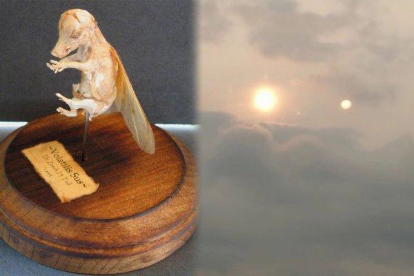 Свинорыл с Нибиру – Мумию крылатого поросёнка нашли в Саратове