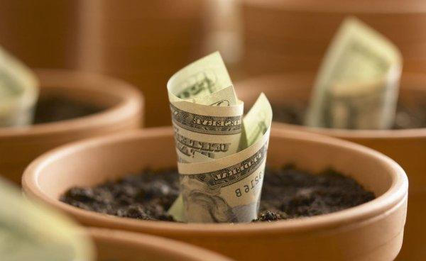 Вырастить деньги? Женщина рассказала, как она «сажает» деньги на Новолуние и собирает урожай