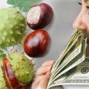 Каштан – магнит для денег: Осенний талисман принесёт богатство в дом