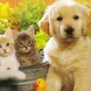 «Критическая несовместимость»: Астролог запретил Тельцам заводить собак