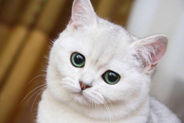 Белую кошку заведешь — любовь и счастье обретёшь: Суженый-ряженый сам примчится «на коне»