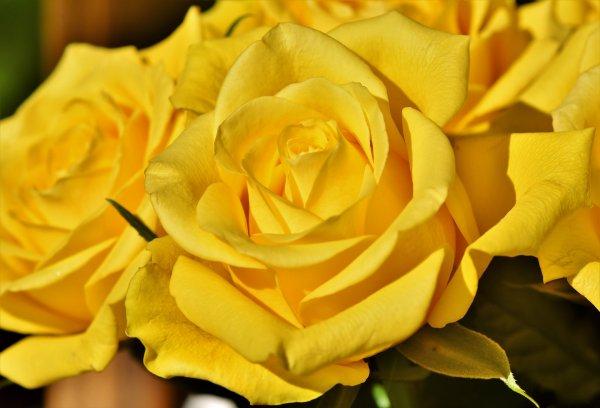 Букет подарил – измену подтвердил: Почему нельзя дарить жёлтые цветы