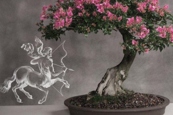 Комнатный бонсай – Стрельцам рай: Растение разовьёт мудрость и интуицию