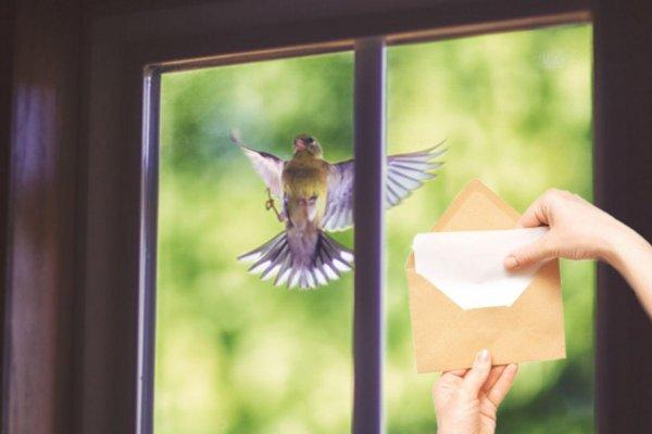 Птица в окно стучится. Провидец рассказал, чего ожидать от таких вестей