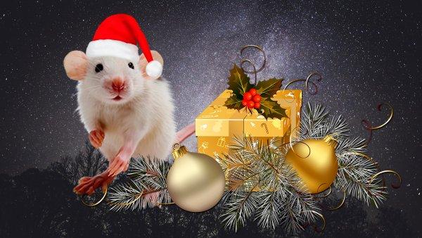 Задобрить Крысу: Как заранее привлечь успех на 2020 год, рассказал астролог