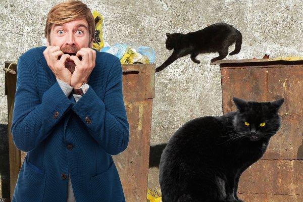 9 лет страданий – Почему нельзя выбрасывать котят?