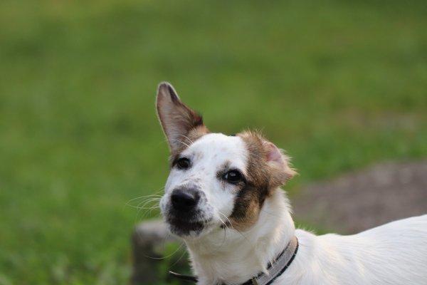 Бездомный пёс достаток принёс: Какие знаки Судьбы несут собаки, рассказал эксперт