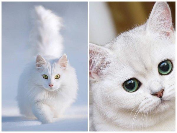 Белый кот удачу принесёт: Эзотерики рассказали о положительном влиянии питомцев