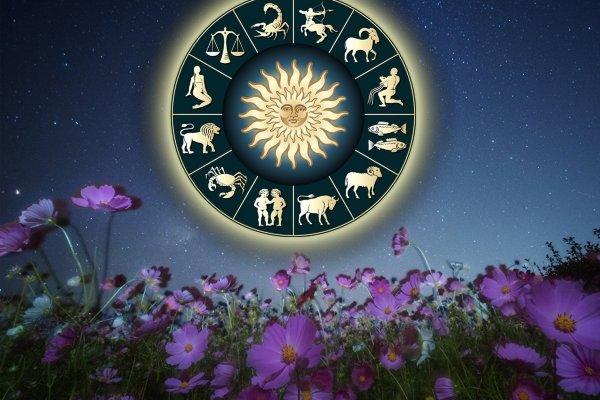 Цветок по Зодиаку: Какое растение защитит знаков от несчастий