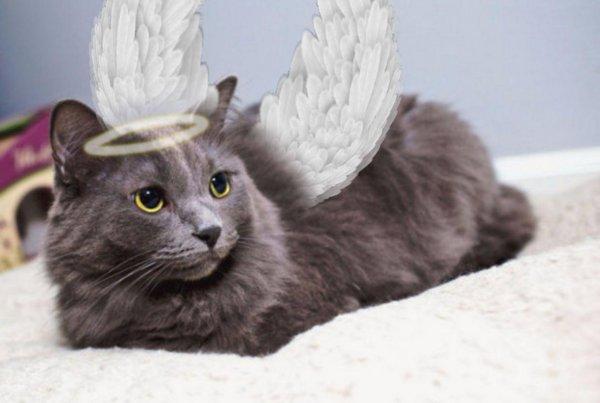 Завести личного ангела-хранителя. Какой кот защитит хозяина от беды — эзотерик