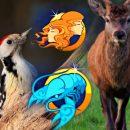 Близнецы — олени, а Раки — дятлы: Гороскоп древних раскрыл секреты всех Зодиаков