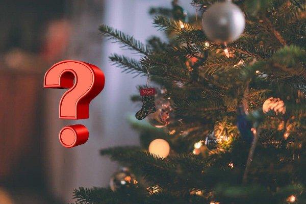 Зеленые иголки круглый год! Искусственная или живая ель? – медиум