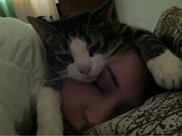Пушистое спасение: Почему кошки странно спят