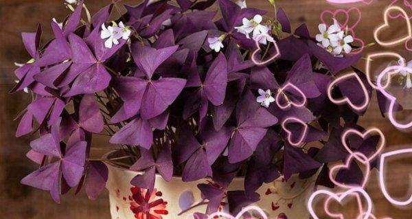 «Зелёная» любовь: Цветы ухаживают за чувствами хозяев
