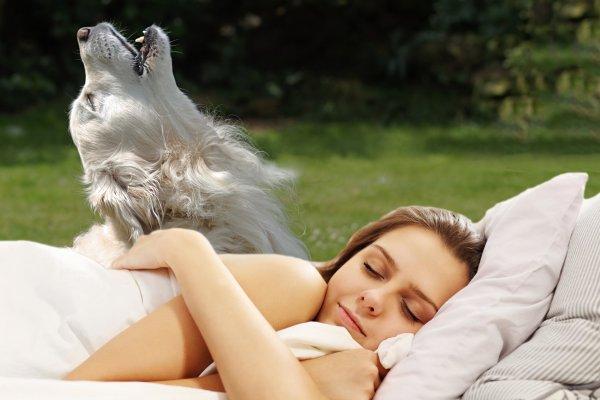 Во сне вой — наяву покой: К чему снятся собаки рассказала экстрасенс