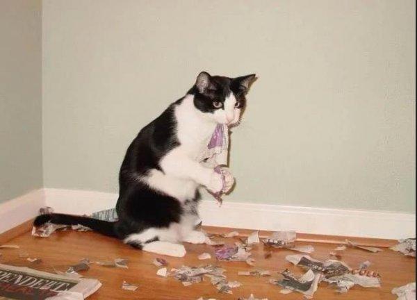 Нагадил в тапки - будут «бабки»! Почему нельзя наказывать кота за «шалости» - экстрасенс