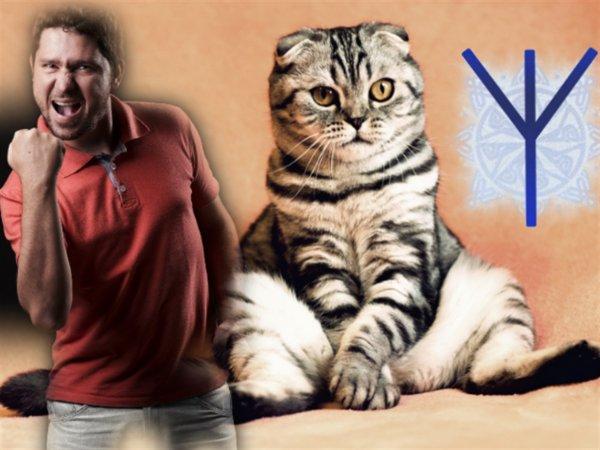 Подарок для кота: Как создать оберег пушистому и поймать удачу
