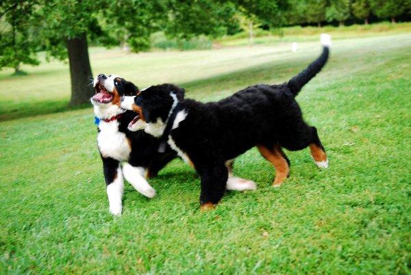 Собаки играют-свадьбу предвещают: Как по поведению пса узнать будущее?