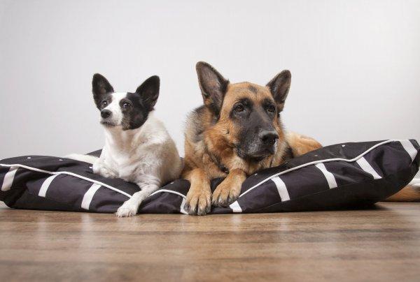 Мохнатое счастье: Почему собаки облизывают хозяев