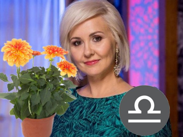 Цветик-семицветик для Весов. Василиса Володина порекомендовала растение для благополучия в новом году