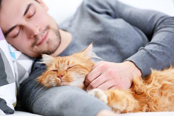 Спать с котом опасно или полезно? Эзотерик рассказал, можно ли пускать питомца на кровать
