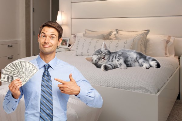 Кошка денег принесёт? Эзотерик рассказал, как сон домашнего любимца может обогатить семью