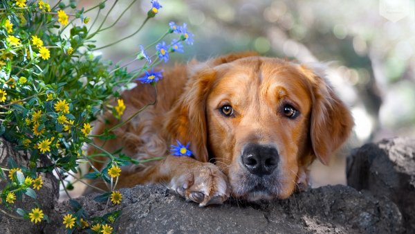 Собака — синоптик. Как по настроению питомца определить погоду, рассказал эзотерик