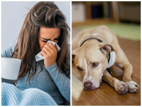 Грустный пёс проблемы принёс: Как животное предупреждает хозяина о несчастьях?