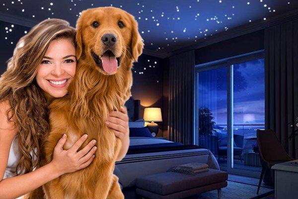 Не только друг, но и талисман: Эзотерик рассказал, как собака поможет наладить жизнь