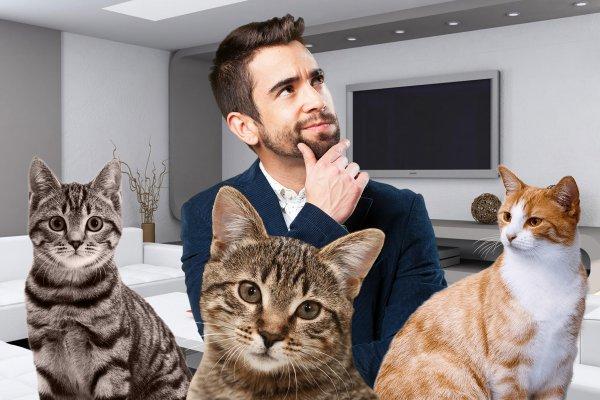 Окрас все поменяет враз: Как цвет кошки способен изменить жизнь хозяина – эзотерик