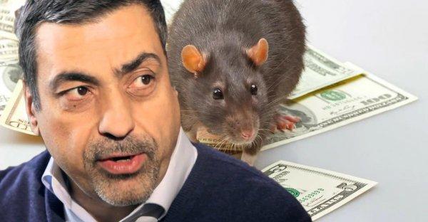 «Кто смел - тот и съел!» Глоба рассказал, как год Крысы повлияет на Зодиаков