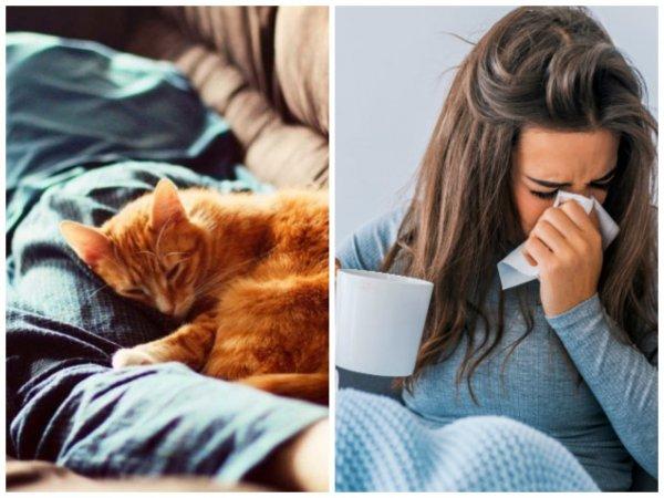 Пушистый доктор: Почему кошка в кровати – предвестник проблем?