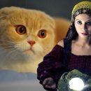 «Ушки на макушке»: Эзотерик рассказал о влиянии вислоухих котов на домочадцев