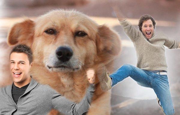Рыжий пёс удачу принёс: Эзотерик раскрыл обычаи на Татьянин день