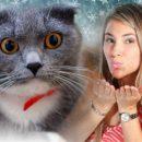 День Еремы – кошка «в деле»: Как оздоровиться 26 января с помощью пушистого
