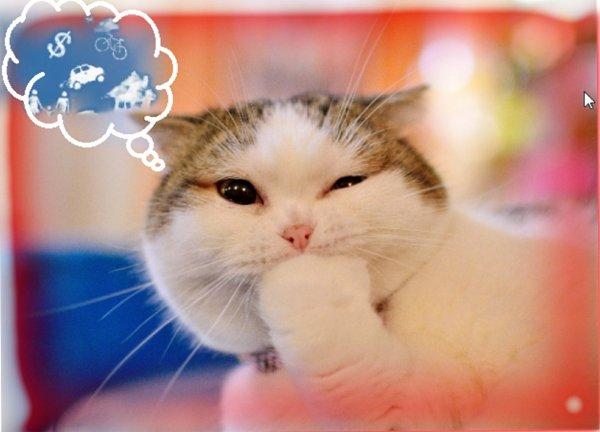 Кот чихает - счастье намечает: Как котейки могут исполнить мечты