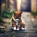 Котёнок с улицы с хозяином милуется – Почему лучше приютить бездомного кота