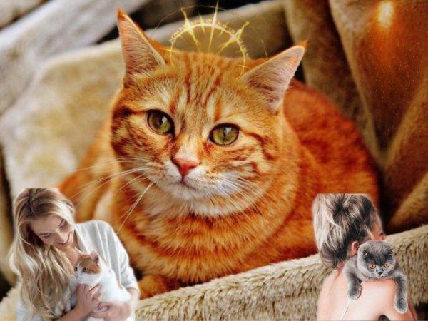 «Кот мурлычет — счастье ищет»: Как энергия животного притягивает удачу