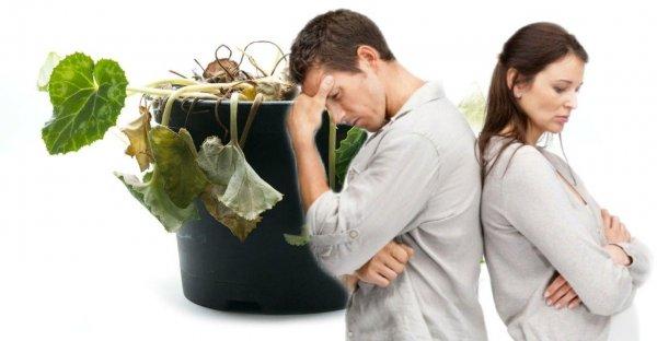 Запах соперницы: как растения в доме чувствуют измены — медиум