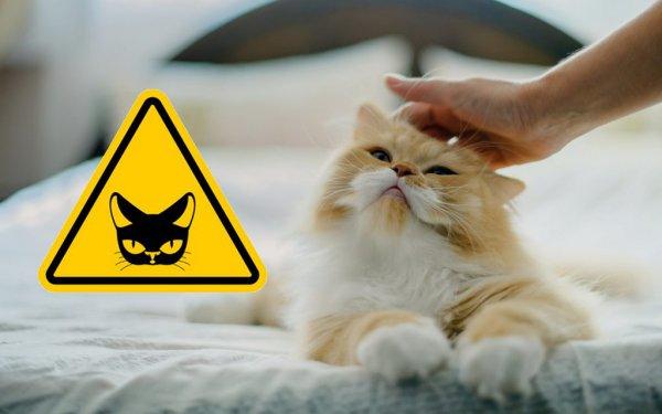 «В гостях не трогайте кота!»: Чем чреваты ласки с чужим любимцем, рассказал эзотерик