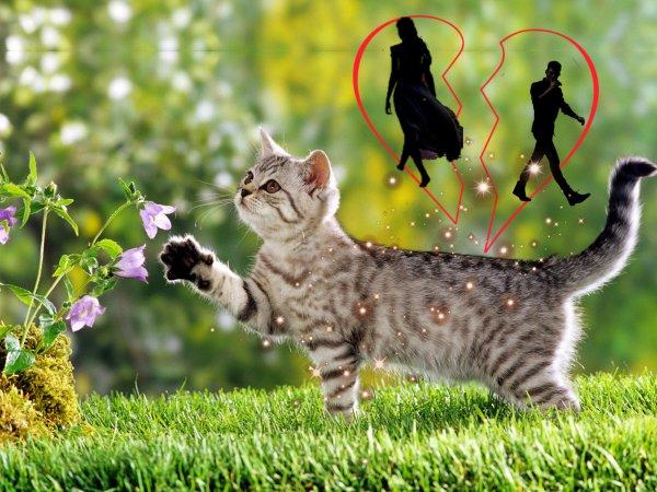 Подарок судьбы: Как кошка с улицы спасёт от развода
