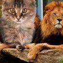 Домашний котик или царь зверей? Три типа Львов-мужчин назвал астролог