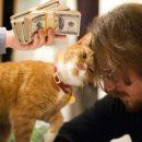 Котики-муркотики: В чём причина кошачьих нежностей в конце февраля?