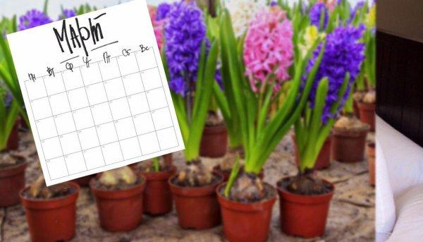 Семена счастья: Эзотерик порекомендовал выращивать цветы для улучшения жизни